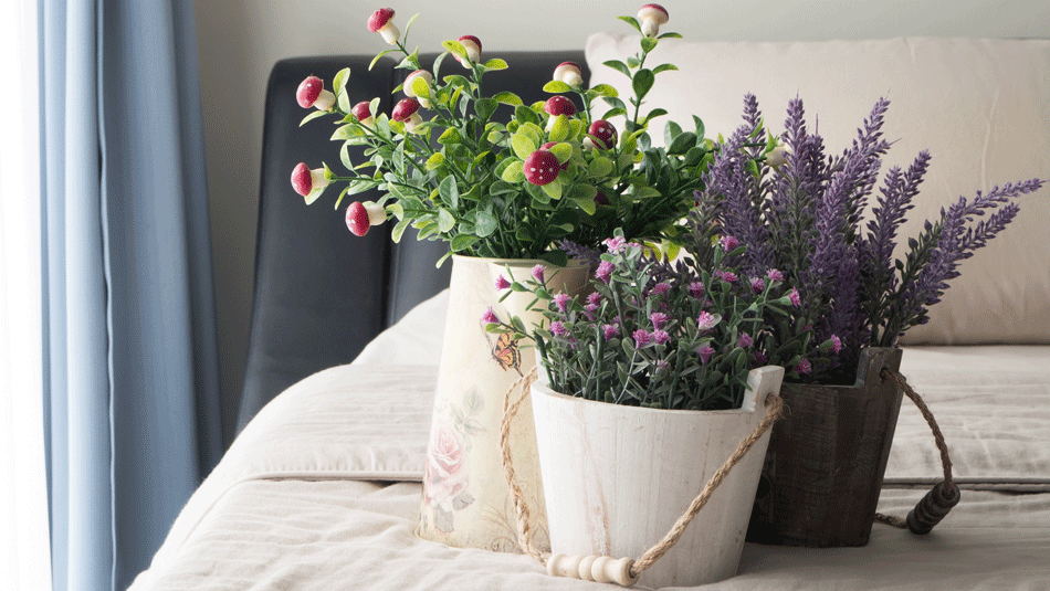 best-houseplants-sleep