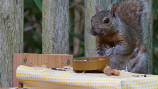This Squirrel Picnic Table Is The Perfect Free Entertainment